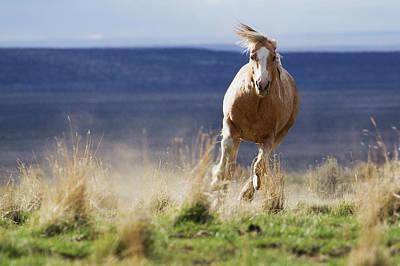 Steen Photograph - Wild Horse Running by Ken Archer