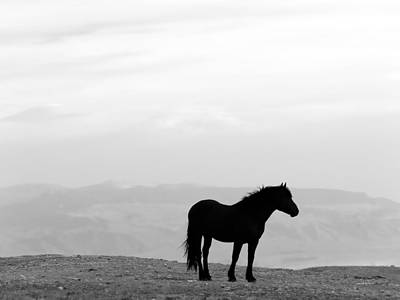 Wild Horse Photograph - Wild Horse Silhouette Bw by Leland D Howard