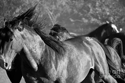 Photograph - Wild Horse Stampede Black And White by Heather Kirk
