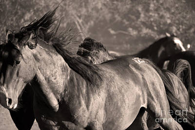 Photograph - Wild Horse Stampede  Brown Tone by Heather Kirk