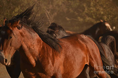 Photograph - Wild Horse Stampede Muted by Heather Kirk