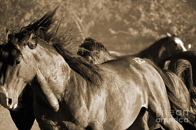 Photograph - Wild Horse Stampede  Sepia by Heather Kirk