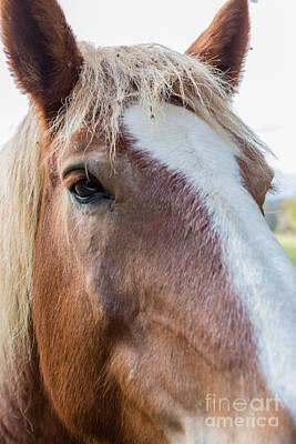 Photograph - Wild Horse Starring by Gene Berkenbile
