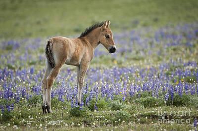 Bear Photograph - Wild Horses-animals-image-12 by Wildlife Fine Art