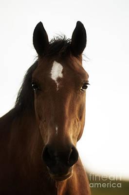 Horse Photograph - Wild Horses-animals-image-14 by Wildlife Fine Art