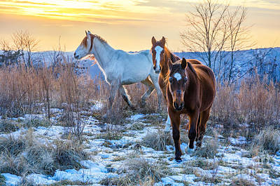 Photograph - Three Amigos by Anthony Heflin