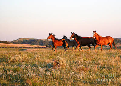 Photograph - Wild Horses At Sunset by Sabrina L Ryan