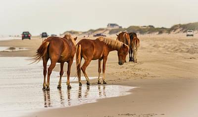 Photograph - Wild Horses by Bonnie Leigh Delar