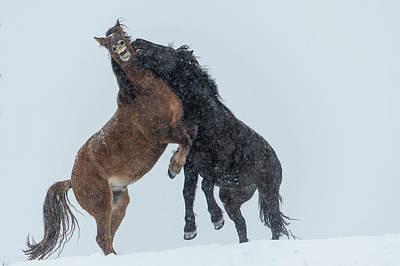 Photograph - Wild Horses  Equus Ferus Caballus by Deb Garside