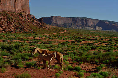 Wild Horses In Monument Valley Art Print by Raul Touzon