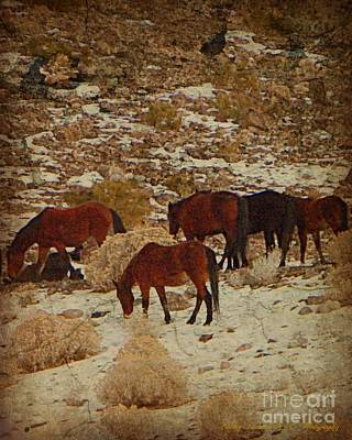Photograph - Wild Horses In The Hills by Bobbee Rickard