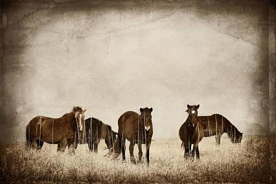 Photograph - Wild Horses by Joye Ardyn Durham
