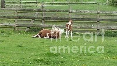 Photograph - Wild Horses by Julie Koretz