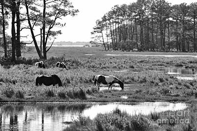 Art Print featuring the photograph Wild Horses Of Assateague Feeding by Dan Friend