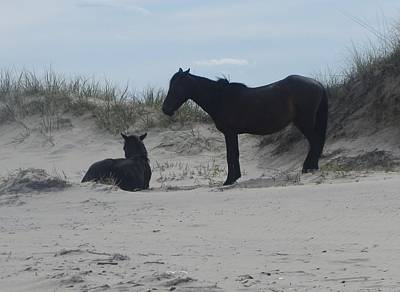 Wild Horses Of Corolla 2  Art Print by Cathy Lindsey