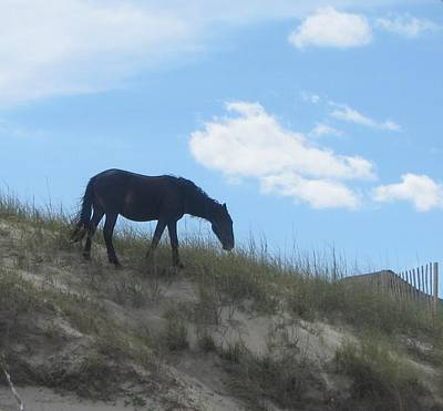 Pony Photograph - Wild Horses Of Corolla 3 by Cathy Lindsey