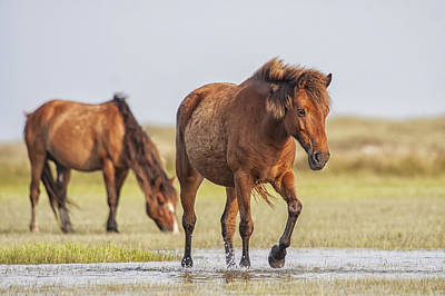 Photograph - Wild Horses On A Walk Across The Flats by Bob Decker