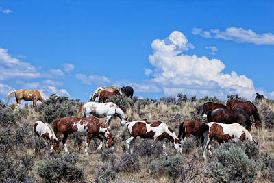 Red Dun Horse Photograph - Wild Horses On South Steens by Kathleen Bishop