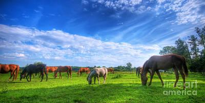 Wild Horses On The Field Art Print