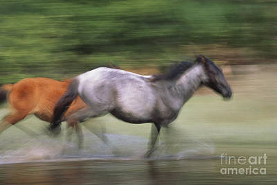 Horse In The Run Photograph - Wild Horses Running by Art Wolfe
