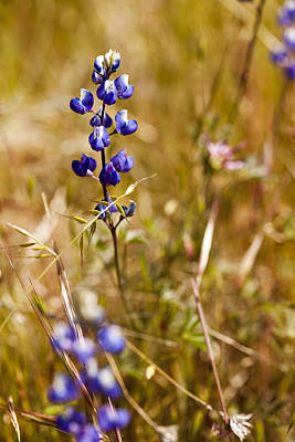 Vertical Photograph - Wild In The Field by Jon Glaser