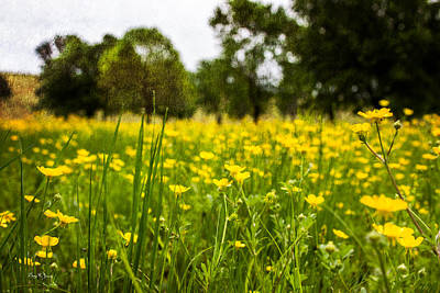 Photograph - Wildflowers - Wild In The Landscape by Barry Jones