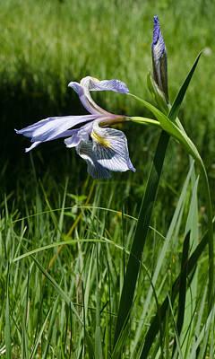 Photograph - Wild Iris by Dakota Light Photography By Dakota