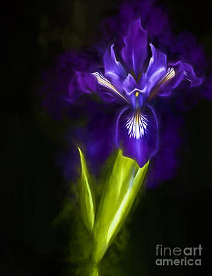 Photograph - Wild Iris by Shirley Mangini