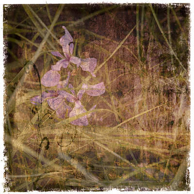 Abstract Photograph - Wild Iris Tapestry by Barbara Northrup