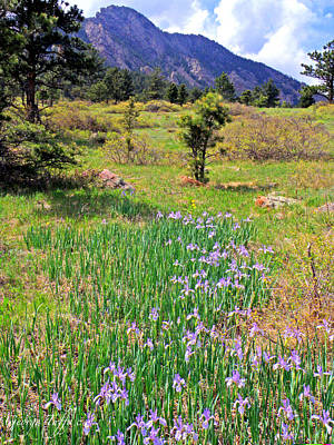 Photograph - Wild Irises by George Tuffy
