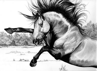 Drawing Of A Horse Drawing - Wild Kiger Mustang Stallion by Cheryl Poland