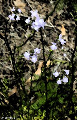 Painting - Wild Lavender Flowers by George Pedro