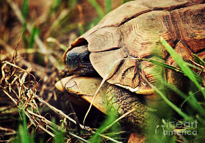 Turtle Photograph - Wild Leopard Tortoise Close Up. Tanzania by Michal Bednarek