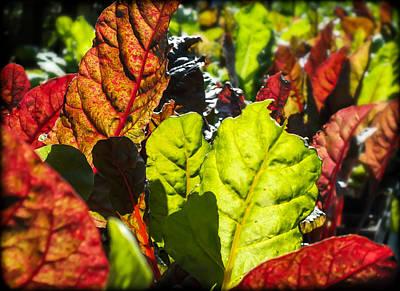 Lettuce Photograph - Wild Lettuce by Karen Wiles