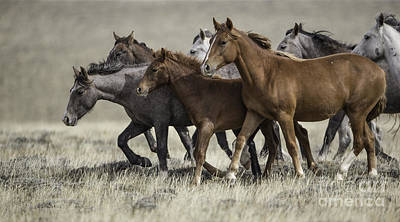 Wild Mares And Foals Art Print by Carol Walker