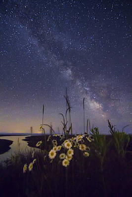 Wild Marguerites Under The Milky Way Art Print by Mircea Costina Photography