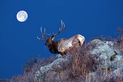 Nature Photograph - Wild Moon by Shane Bechler