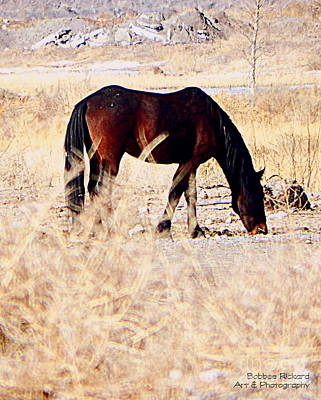 Photograph - Wild Mustang Grazing by Bobbee Rickard