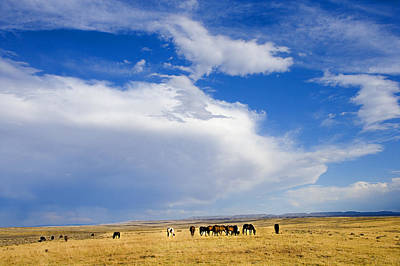 Photograph - Wild Mustang Herd Grazing by Rich Franco