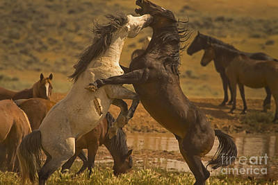 Wild Mustang Stallions - Signed Art Print by J L Woody Wooden