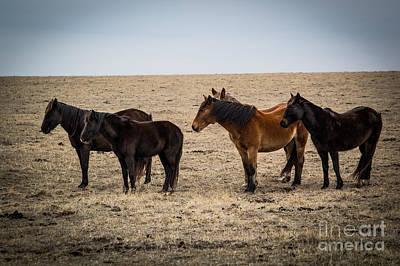 Wild Mustangs Print by Jim McCain