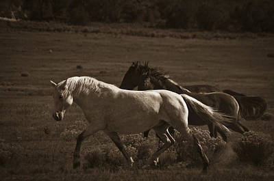 Wild Mustangs Of New Mexico 10 Art Print