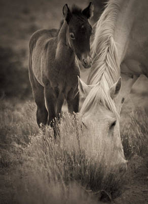 Wild Mustangs Of New Mexico 19 Art Print