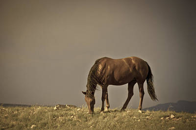 Wild Mustangs Of New Mexico 20 Art Print by Catherine Sobredo