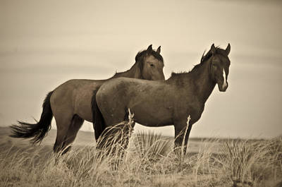 Wild Mustangs Of New Mexico 3 Art Print