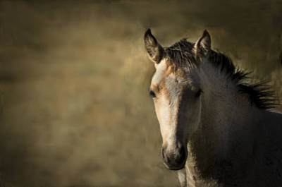 Wild Mustangs Of New Mexico 35 Art Print