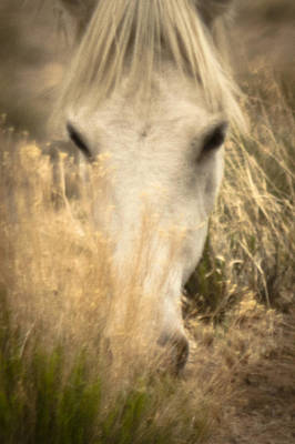 Wild Mustangs Of New Mexico 36 Art Print