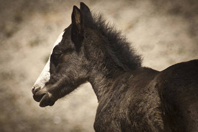 Wild Mustangs Of New Mexico 37 Art Print