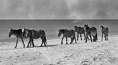 Wild Mustangs Of Shackleford Print by Betsy Knapp