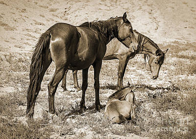 Western Pleasure Horse Photograph - Wild Mustangs Of The West by Janice Rae Pariza